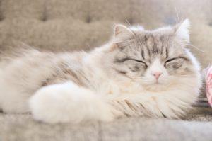 スリーピングビューティーダイエットは寝るだけで痩せられる魔法のダイエット。ただし注意が必要。